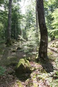 Da knistert die Spannung: Der deutsche Wald unter Strom, weil es fast ein bisschen so wirkt, als hätte der Himmel die Erde geküsst.